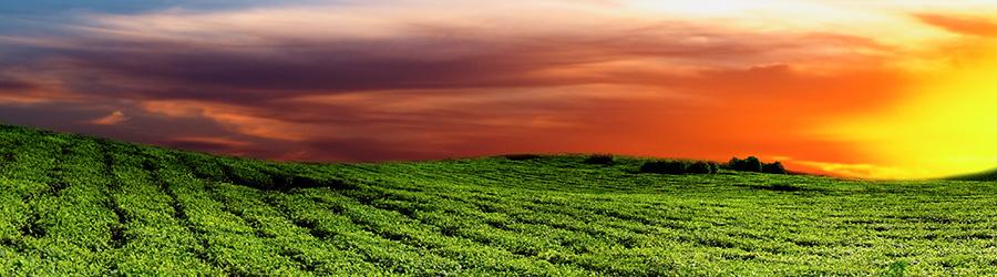 Banner-Image Tee aus Afrika