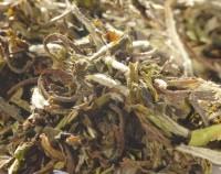 China Pai Mu Tan 1ST Grade White Peony - Weisser Tee