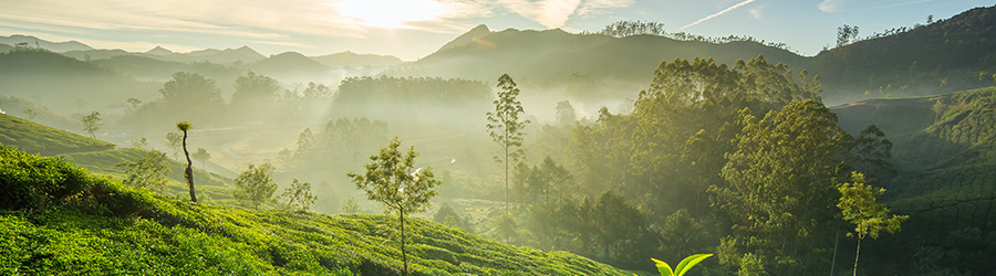 Banner-Image Java, Nepal, Südkorea, Vietnam