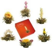Erblüh Tee Nachfüllbox Frühjahrslese 6er von der Creano GmbH